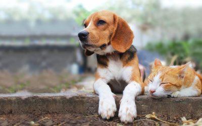 FDA Warning: Texas Tripe in Raw Pet Food
